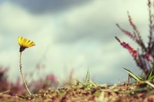 flower-815301_640